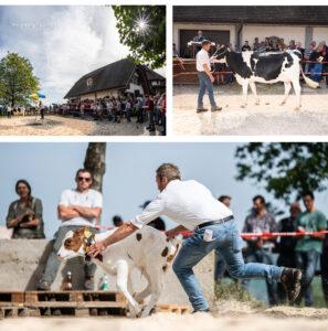 Viehsteigerung auf dem Kehrhof, Oberkirch bei Familie Fritz Wittwer